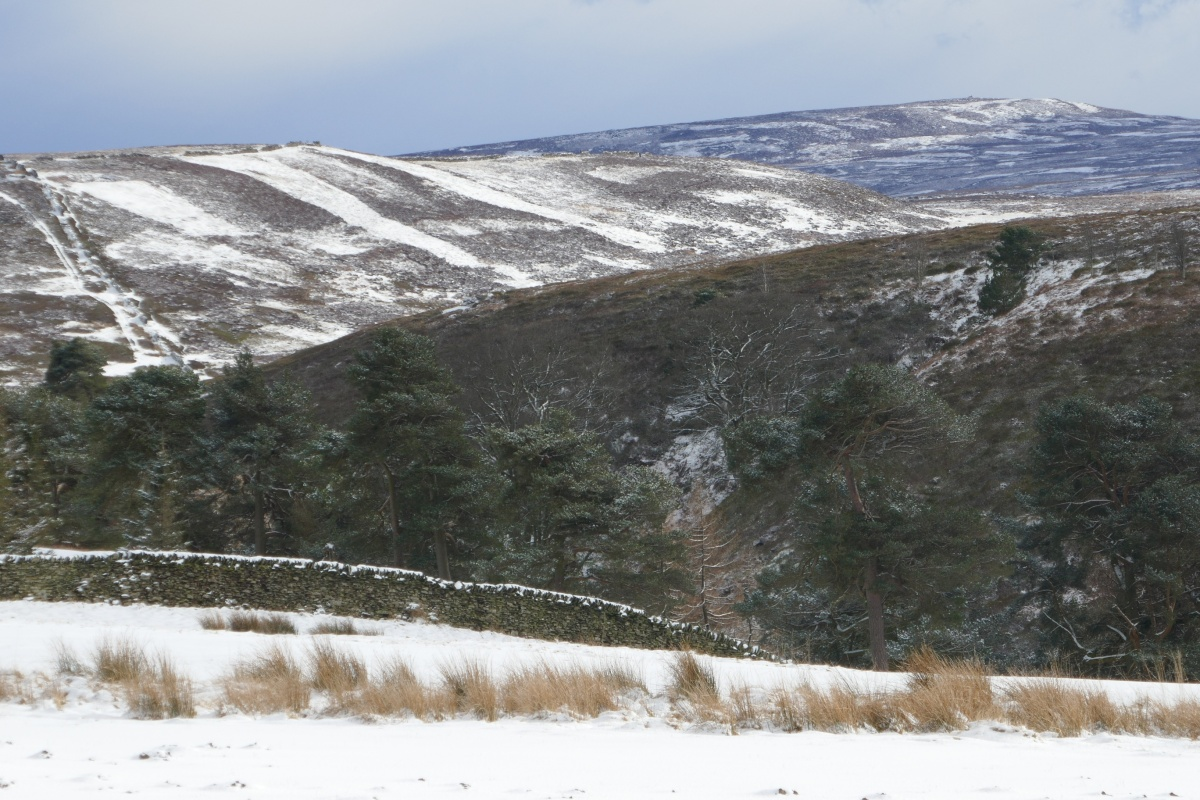 Moorland winter