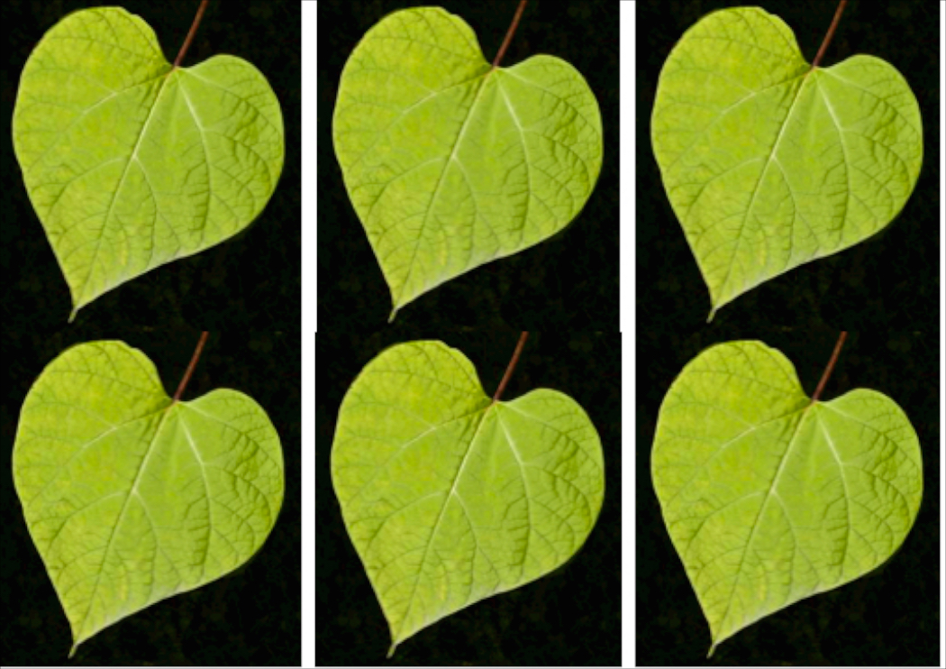 Leaf (composite) 058